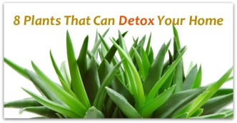 8 Plants That Can Detox Your Home